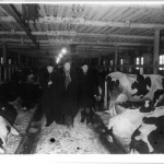 A long-faced Mao being shown the glories of Soviet animal husbandry in a freezing cowshed at Krasnogorsk, January 1950.  Interpretor Shi Zhe on the left.